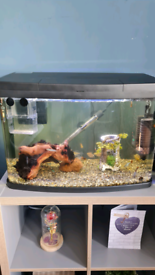 64 litre fully stocked fish tank