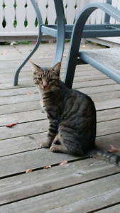 Found cat - Lackner and Keewatin area