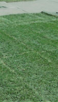 Sod Installation – Great Prices!