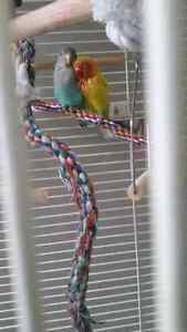 2 lovebird et grande cage en coin West Island Greater Montréal image 6