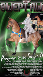 Ladies Saddle Suit