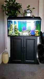 35 gallon Fish Tank and Stand for sale