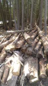 Cedar logs for sale.. come take a look..