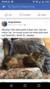 missing cat shediac