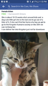 Kitty needing to find home