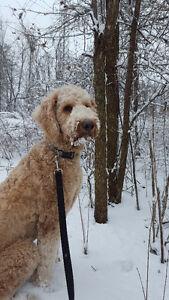 The Sophisticated Dog - Dog Walker, Pet Sitter, Trainer Sarnia Sarnia Area image 5