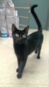 """MARIA"" Female Spayed - DAINTY GIRL LOOKING FOR A HOME"