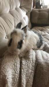BABY BUNNIES FOR SALE!