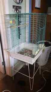 Cockatiel sized bird cage for sale