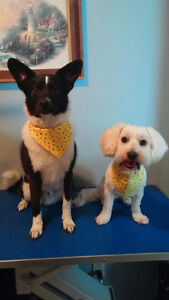Dog Grooming in Tavistock Stratford Kitchener Area image 6
