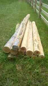 10 Cedar Posts and 2 small roles of 9 Guage wire Peterborough Peterborough Area image 1