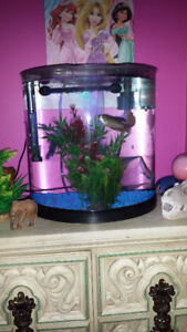 Nice Complete Fish Tank For Sale
