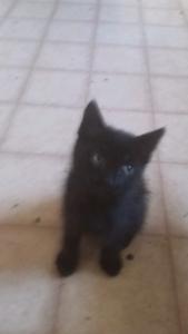 Free Kitten 8 wo