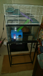 10 gallon Hamster aquarium