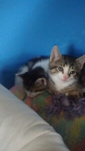 Free kittens ready to be picked up