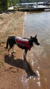Lost Dog LifeJacket