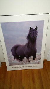 MUSTANG HORSE PICTURE