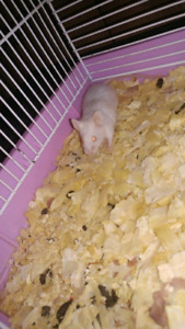 Two female mice!