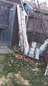 Birch decor Oakville / Halton Region Toronto (GTA) image 2