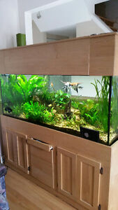 120 Gallons aquarium, stand and everything included