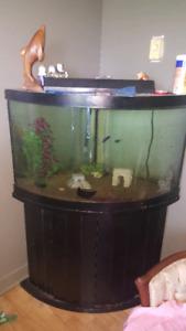 Aquarium 100 gal, 378L