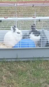 Two Bunnies with Cage