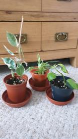 A bundle plants