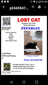 Lost cat Brighton