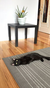 Cutest Male Black Cat For Sale!!!!