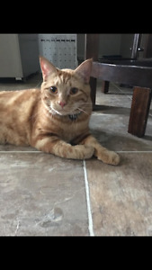 Male cat looking for new home