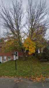 FALL CLEAN UP/SNOW REMOVAL Kitchener / Waterloo Kitchener Area image 1