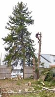 Tree and hedge services