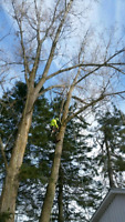 Contract tree climber for hire