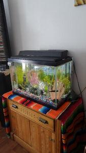 All equiped aquarium