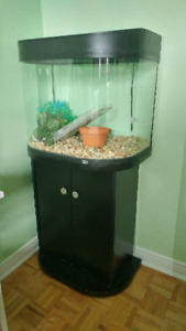 Aquarium 20 gallons - kit complet