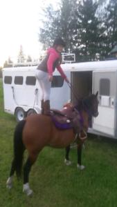 Kid's horse!