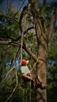 TREE PRUNING, TREE REMOVAL, STUMP REMOVAL