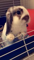 Rabbit + cage for sale