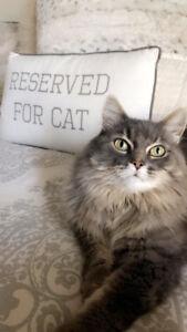 MISSING CAT IN OAKVILLE