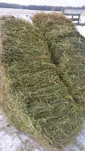 Meadow Hay - Small Square Bales