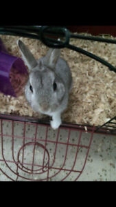 Looking for loving home for our bunny