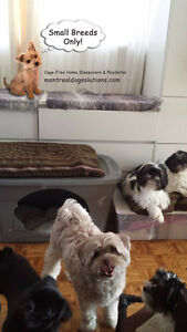 HAPPY LITTLE DOGS HOME DAYCARE SINCE 2010 West Island Greater Montréal image 10