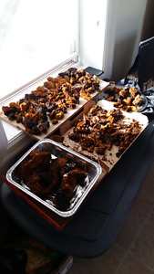Premium winter harvested chaga