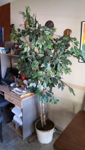 Artificial Fig tree with lights