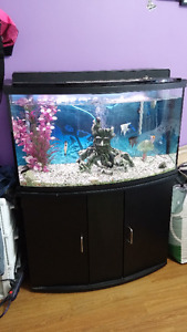 aquarium 46 gallon