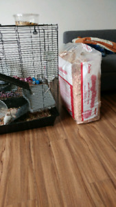 3 rats and large cage