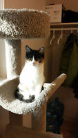 Calico Rescue Kitten - Spayed/Fully Vaccinated/Very Friendly