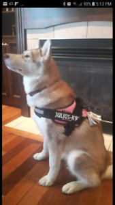 Julius K9 dog harness and accessories