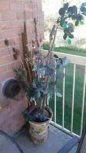 Out door home decorative plants/pottery Cambridge Kitchener Area image 4