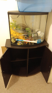 29L Curved front Topfin aquarium and stand with supplies